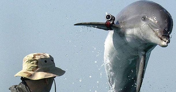 The Navy Proves That Dolphins Are The Most Bad-Ass Creatures In The Water